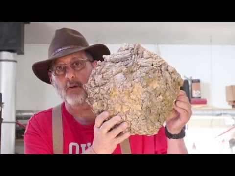 Coring:    Two Burl Bowls: woodturning with Sam Angelo